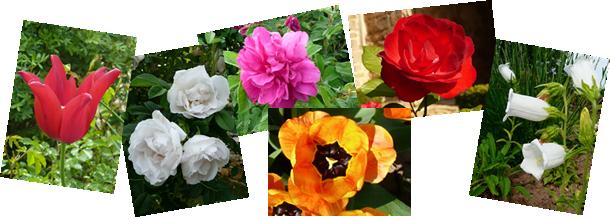 Fleurs du jardin de la Grand Cour à Mornay-Berry
